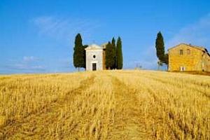 Площите с пшеница в Италия през сезона 2012/13  ще бъдат увеличени с 15% - МСС на САЩ