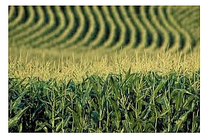 Частен вносител от Южна Корея договаря 272 кмт царевица