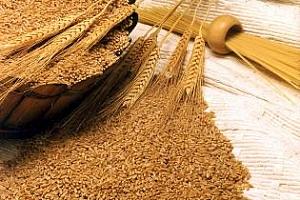 Тунис и Катар с търгове за пшеница