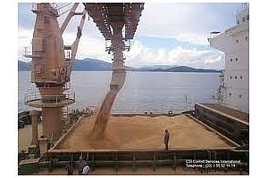 Експорт на зърно и маслодайни култури от пристанище Варна 4 април-7 април