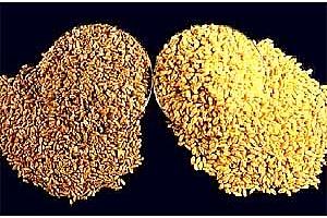 Алжир и Тайван с търгове за хлебна пшеница