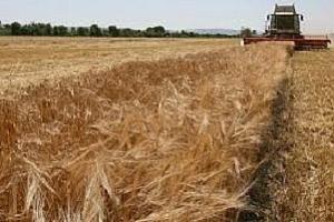 Йордания с търгове за 100 кмт пшеница и 100 кмт фуражен ечемик