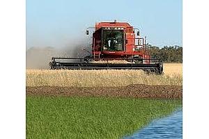 Частни вносители от Южна Корея с покупка на 65 кмт фуражна пшеница