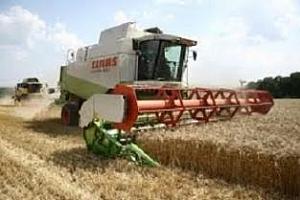 Търг за минимум 50 кмт пшеница обяви Алжир
