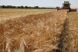 Йордания договаря 50 кмт ечемик, насрочва търг за пшеница