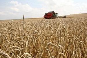 Алжир със солидна поръчка от 520 кмт пшеница