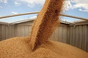 Отново румънска и руска пшеница печелят египетския търг