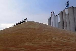 Тайван с международен търг за 85 кмт хлебна пшеница