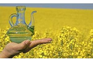 Украйна намалява производството на рапично масло през 2016-17