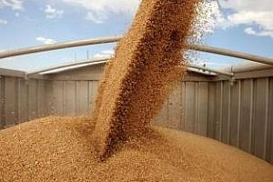 Саудитска Арабия обявява търг за 600 кмт твърда пшеница
