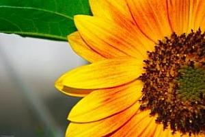 Цени маслодайни семена и продукти Чернo море 4-11 август