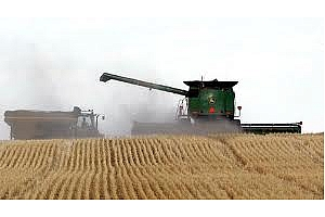 След спада на фючърсите, Египет отново е с търг за пшеницата