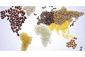 Топ 10 на световните вносители на царевица