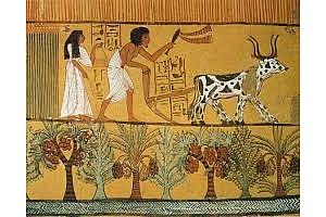 Египет планира да произвежда 2 реколти от пшеница на сезон
