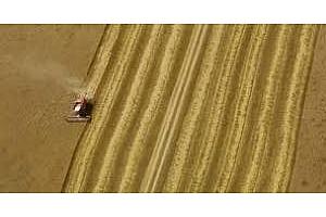 Индия прогнозира прибирането на рекордна реколта пшеница