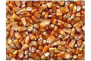 Фуражна пшеница, царевица и ечемик са закупени от Израел