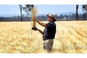 Нов рекорд по добив на пшеница е поставил фермер от Нова Зеландия