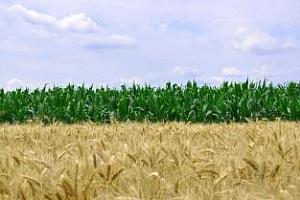 Саудитска Арабия увеличава вноса на пшеница