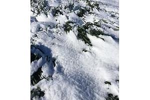 Слани и сняг в САЩ, взривяват пазара на пшеница