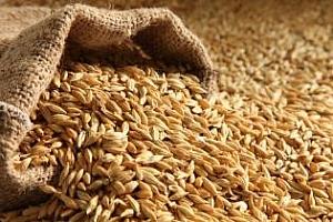Йордания приема оферти за фуражен ечемик и пшеница
