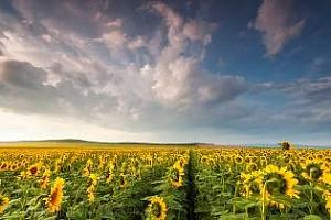 Цени маслодайни семена и продукти Черно море 2-9 май