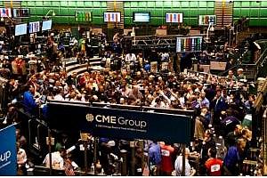 Срив на бразилския реал потапя маслодайните пазари