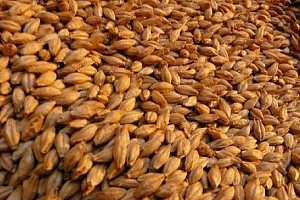 Йордания отменя търг за фуражен ечемик
