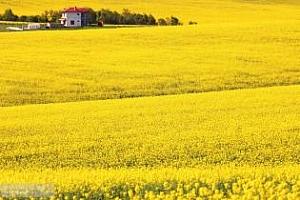 Цени маслодайни семена и продукти Черно море 29 май-5 юни