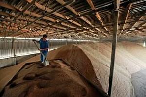 През 2012/13 МГ крайните запаси от пшеница в света ще бъдат 185,8 млн. тона