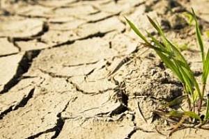 Уверено следпразнично завръщане на пшеница и соя на CBOT