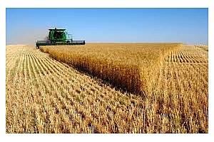 Търг за пшеница с доставка за октомври 2017 днес има и Алжир