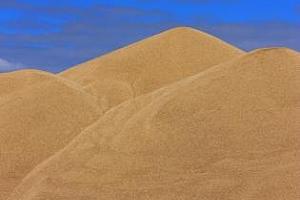 Сибир е сред лидерите по ръст на цените на зърното