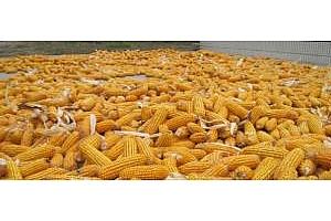 Южна Корея договаря 60кмт царевица за януари 2018