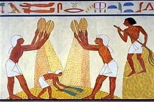 Египет купува пшеница с доставка около Коледа