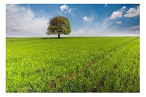 83% от зърнените посеви в Украйна са в добро състояние