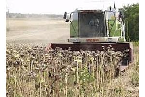 Запасите от слънчоглед в Русия спадат 13%