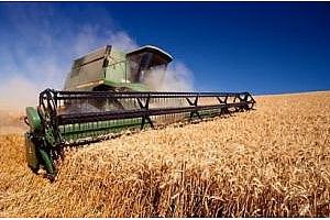 Египет: стратегическите запаси от пшеница са достатъчни за 6 месеца