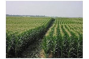 Евтина царевица и пшеница договорени от Южна Корея