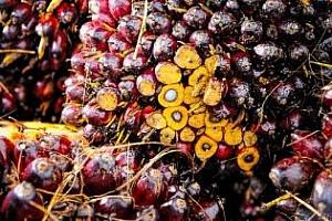 Индия повишава вносните мита на палмовото масло и нахута