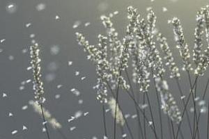 Мразовита пролет в САЩ и валежи във Франция подкрепят цените на пшеницата