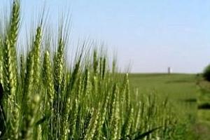 Йордания купи на търг пшеница от Черноморския басейн