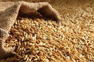 Тунис и Йордания с търгове за хлебна пшеница и фуражен ечемик