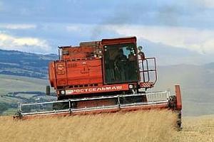 Хидрометеоцентърът на Украйна прогнозира понижаване на добивите от зърнената реколта с 22%