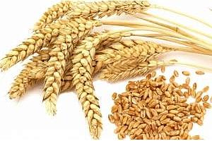 Сирия е договорила 200кмт черноморска пшеница