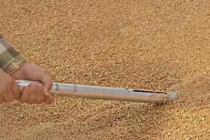 91% от новата реколта пшеница във Франция е хлебна