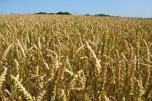Русия и Румъния притежават сериозен потенциал за установяването на взаимодействие в аграрния сектор