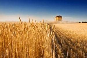В Русия и Украйна прибирането на реколтата достигна рекордни нива