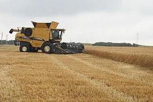 През август цената на пшеницата ще бъде на ниво 1500-1550 грн/т
