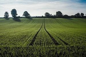 Тунис ще купува пшеница и ечемик за февруари 2019