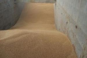 Сърбия купи 100 хил. тона пшеница